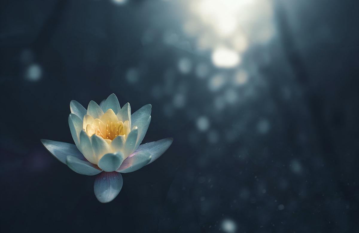 Imparare a meditare a Udine